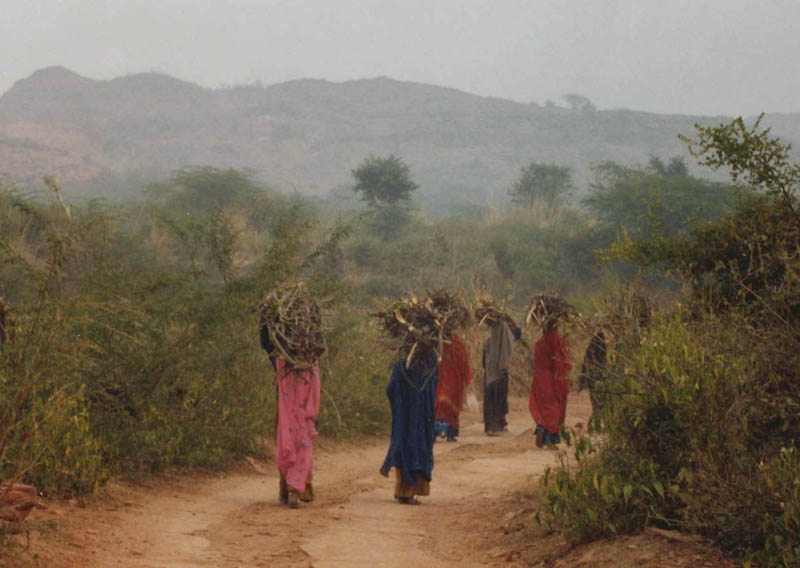 A village that plants 111 trees for every girl born in Rajasthan Mahim Pratap Singh sexy girl