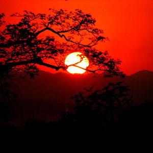 Sunset in the Kaziranga National Park