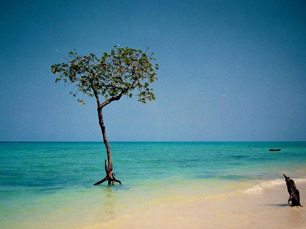 Dreaming of Mangroves