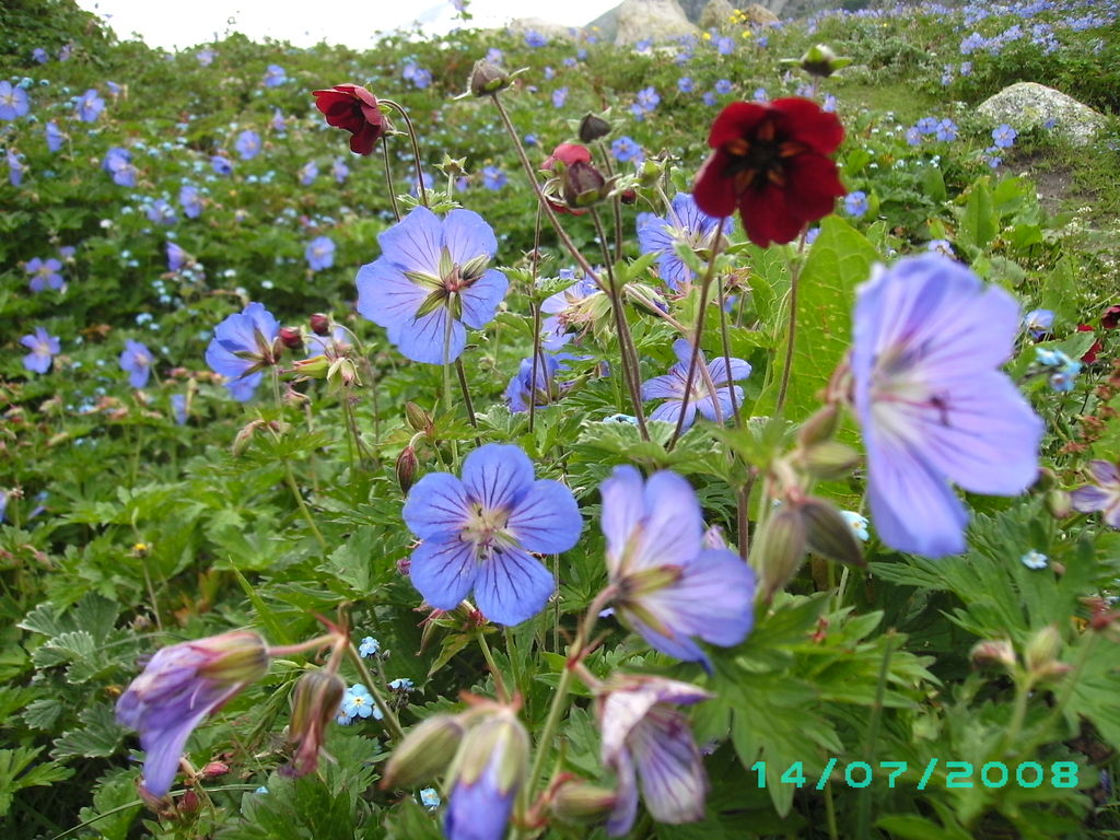 Flora in India