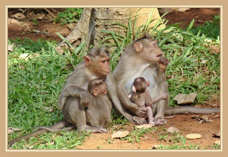 Monkeys Time Travel Rules