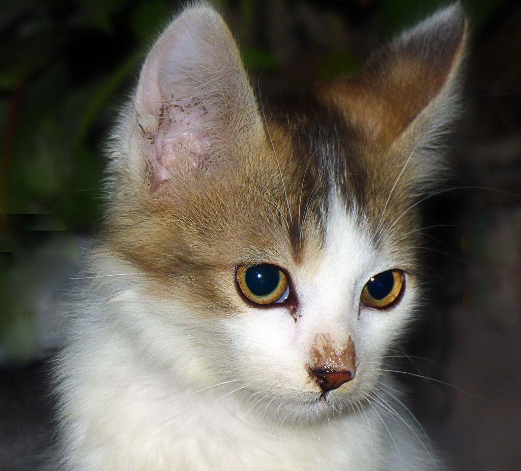 the little pet