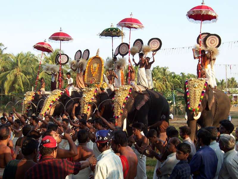 Kerala Elephant Paraded At An Annual Festival Dies After