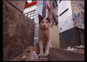 A cat by Safari-Pena.  Tags: Kolkata, West Bengal, City Life, cat.