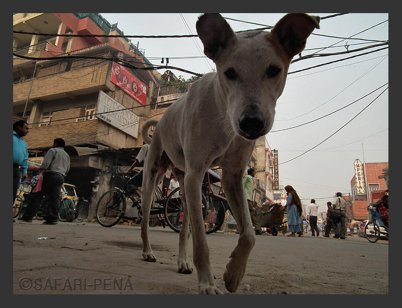 Dog in Paharganj