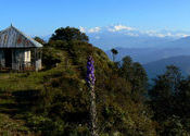 Mt. Kanchenjunga from Chintapur Trekkers hut by somnath.  Tags: Maimajhuwa, Maipokhari, Chintapur, Kanchenjunga.