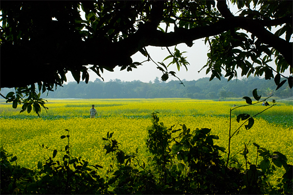 West Bengal Beautiful Landscapes of West Bengal