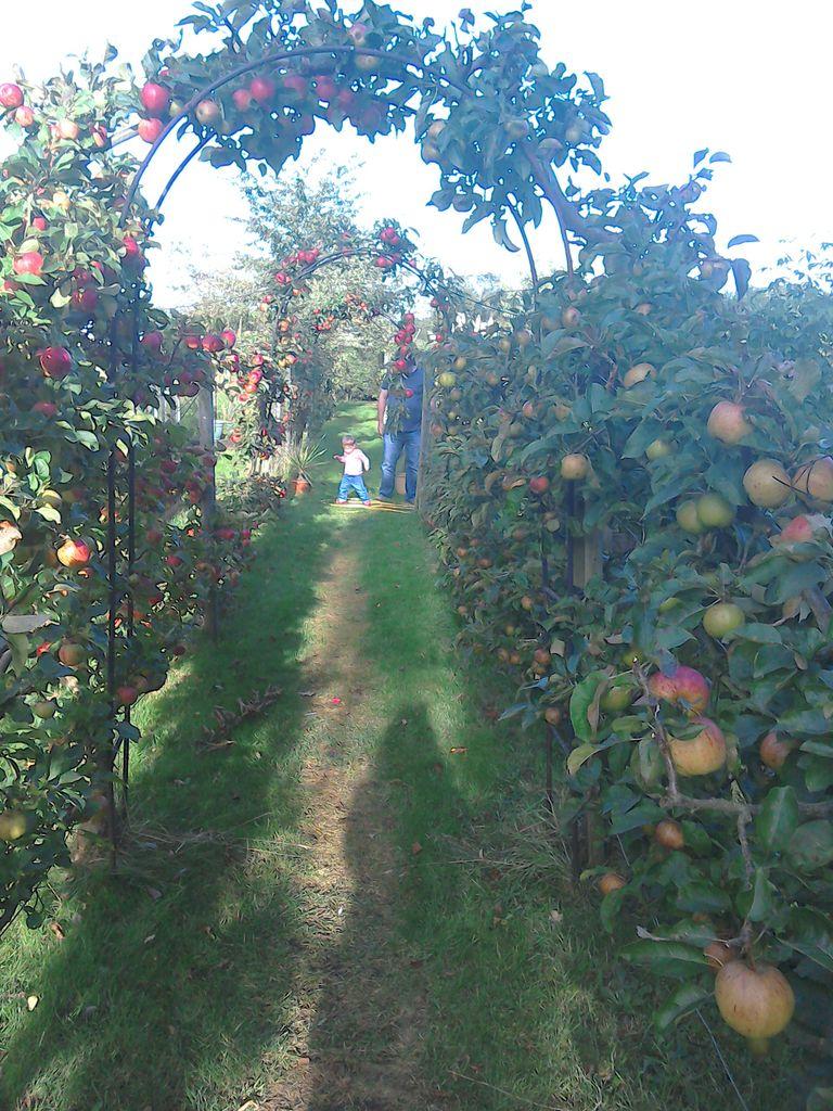 Apples & Pears & granddaughter