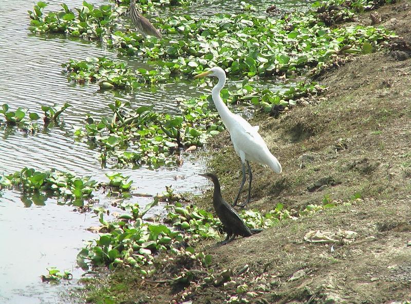 Kanpur India  city images : Kanpur Birds India Travel Forum | IndiaMike.com