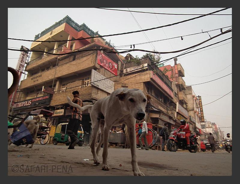 Dog in Paharganj