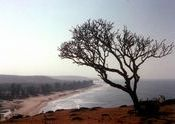 Arambol beach from the cliffs by -m2-.  Tags: Arambol, Goa, Arambol Beach, beach.