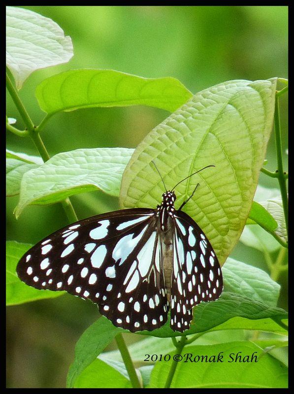 Butterflies In Maharashtra Nature Park