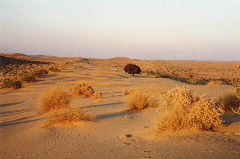 Thar Desert near Jaisalmer, Rajasthan - India Travel Forum ...