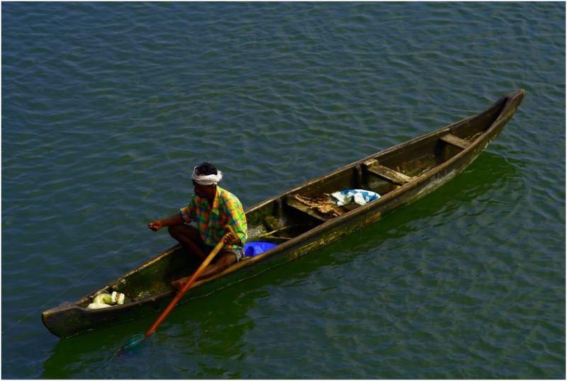 River fish in kerala - photo#10