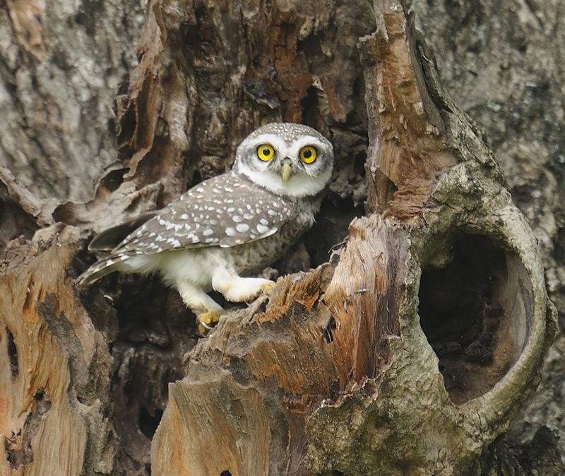 Baby owl?? - India Travel Forum | IndiaMike.com