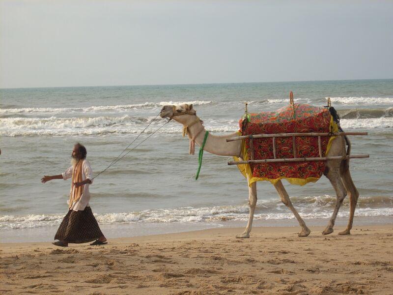 Camel on Puri Beach