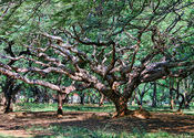 Cubbon Chiaroscura by abracax.  Tags: City Life.