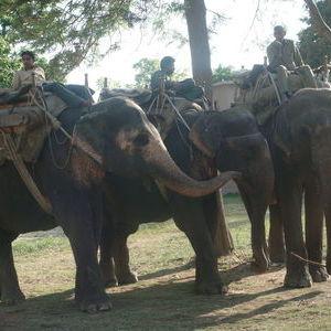 Elephant Safari in Jim Corbett National Park