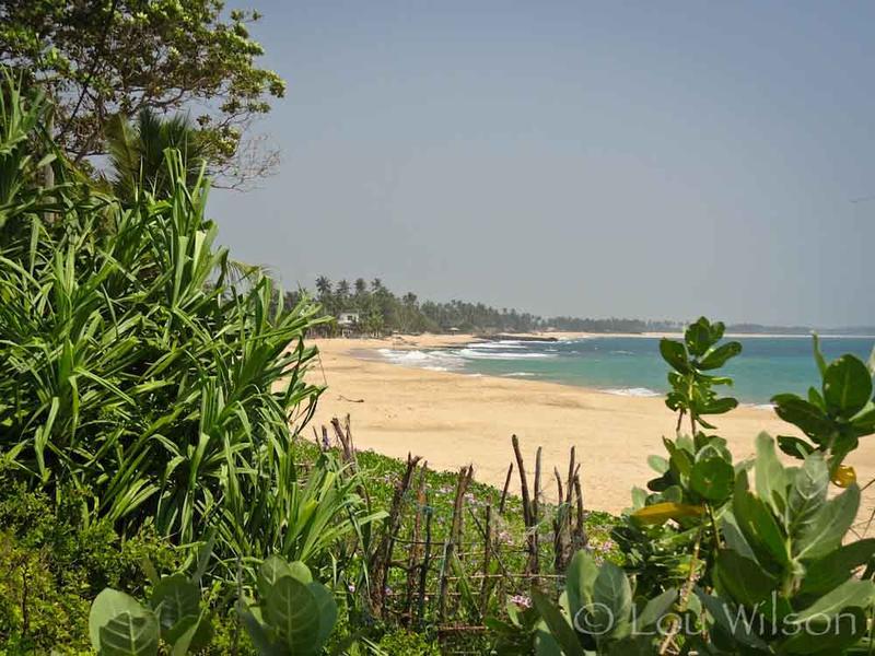 Tangalle Sri Lanka  City new picture : Tangalle Sri Lanka India Travel Forum   IndiaMike.com