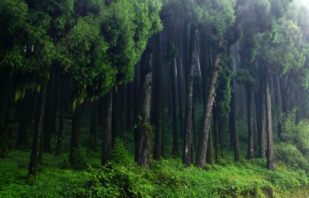 On the way to sukhiapokhri darjeeling