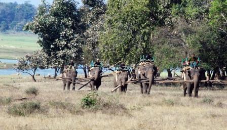 Elephants Returning.jpg