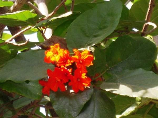 Name:  Blooming.jpg Views: 2014 Size:  33.7 KB