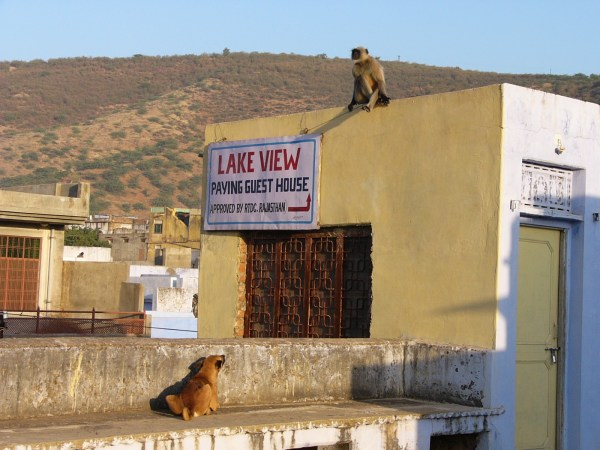 lake view guesthouse bundi.jpg