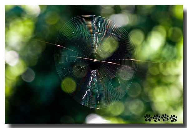 Name:  Spiderweb copy.jpg Views: 522 Size:  30.8 KB