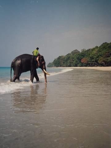 Name:  Elephant Bath.jpg Views: 778 Size:  16.5 KB