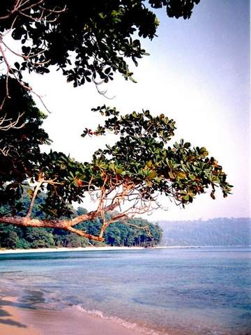Name:  jungle-meets-sea.preview.jpg Views: 786 Size:  39.0 KB