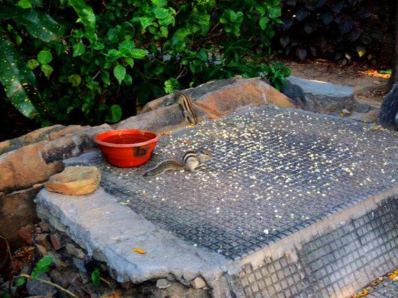 Name:  Udaipur Dudh Talai Garden.jpg Views: 1239 Size:  100.6 KB