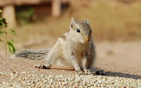 Name:  squirrel.jpg Views: 943 Size:  41.0 KB