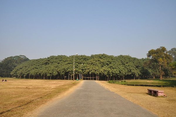 800px-Acharya_Jagadish_Chandra_Bose_Indian_Botanic_Garden_-_Howrah_2011-01-08_9728.jpg