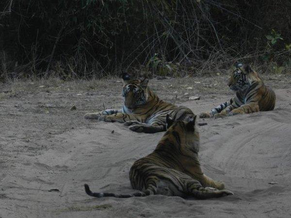 Name:  banbei cubs.jpg Views: 384 Size:  52.4 KB