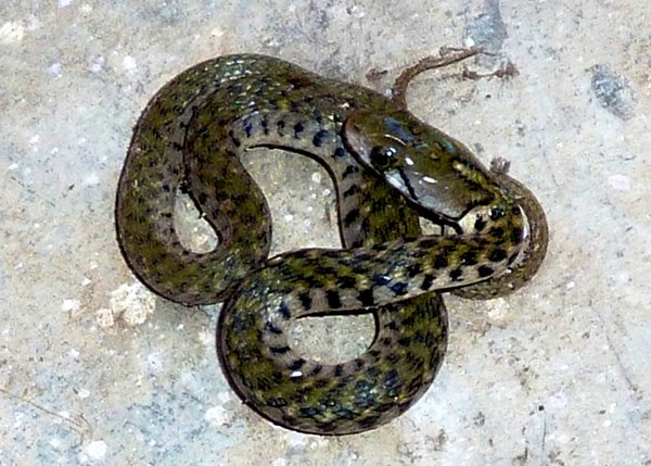 Name:  snake2.jpg