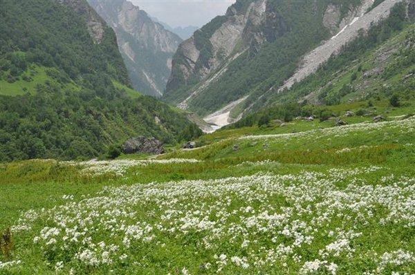 Valley of Flowers & Hemkund Sahib - Page 146 - India