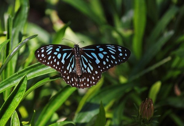 Name:  Butterfly.jpg Views: 171 Size:  46.5 KB