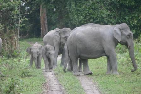 Guruvayur elephants question - Page 2 - India Travel Forum ...