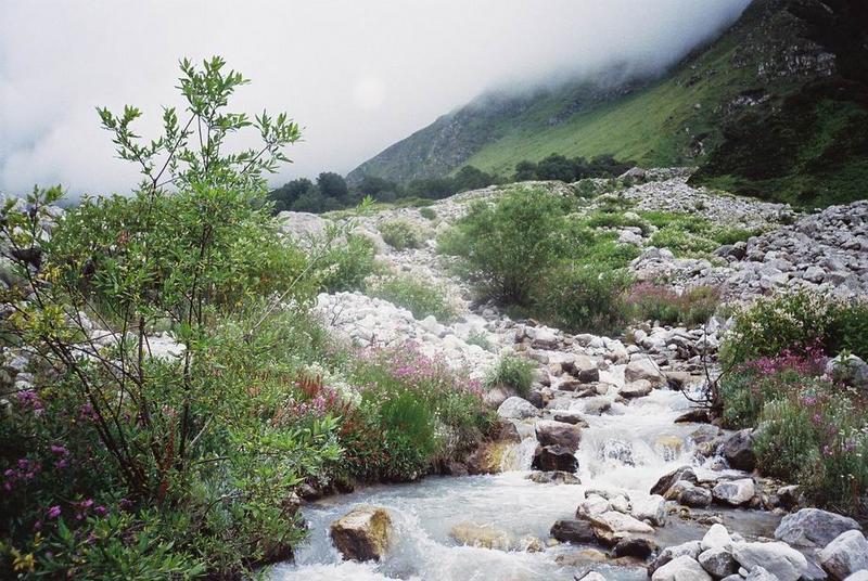 Valley of Flowers & Hemkund Sahib - India Travel Forum