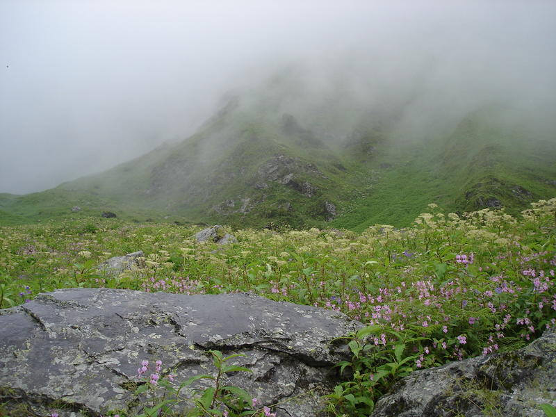 Valley of Flowers & Hemkund Sahib - Page 2 - India Travel