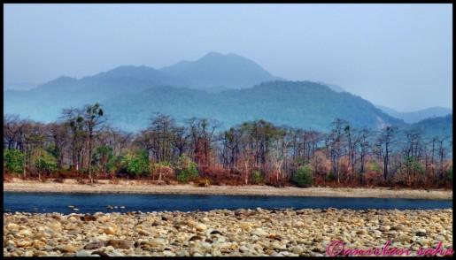 Manas National Park Assam India Travel Forum