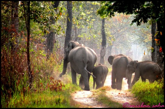 manas national park or manas wildlife