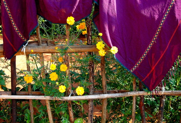 Name:  4 Flowers infront of a hut.jpg