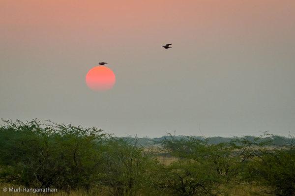 Name:  sunset1-1.jpg Views: 326 Size:  35.0 KB