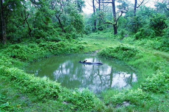 Name:  5 Rhino in the waterhole.jpg Views: 1248 Size:  100.3 KB