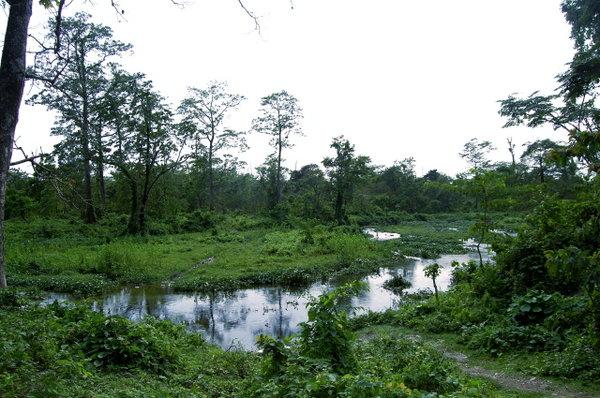 Name:  2 Choto Nadi (Malangi River) behind Malangi Lodge.jpg Views: 709 Size:  81.1 KB