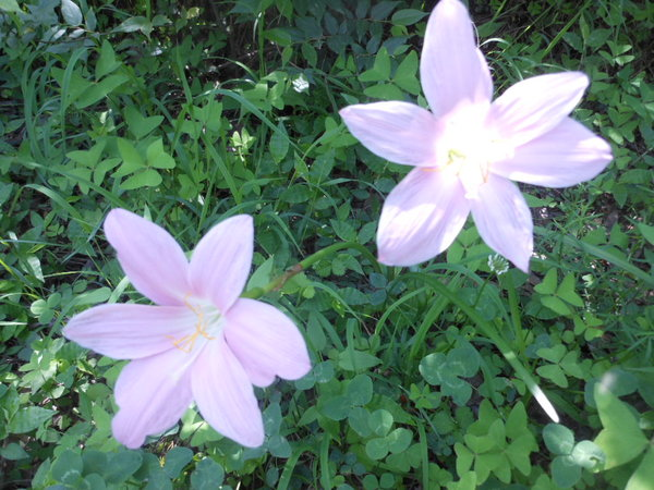 Name:  Lily.jpg Views: 46 Size:  80.8 KB